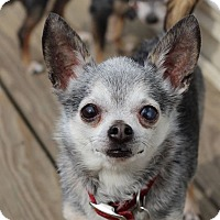 Adopt A Pet :: Franklin - Romeoville, IL