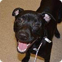 Adopt A Pet :: Bob Barker - Troy, MI