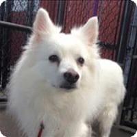 Adopt A Pet :: Baloo - Portland, OR