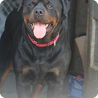 Adopt A Pet :: Zuri - Frederick, PA