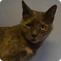Adopt A Pet :: SPARKLE - Brooklyn, NY