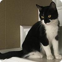 Adopt A Pet :: Tootsie - Hamilton, ON