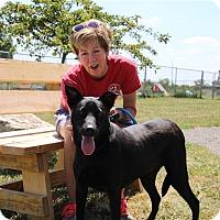 Adopt A Pet :: Taylor - Elyria, OH