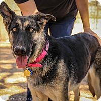 German Shepherd Dog Mix Dog for adoption in Phoenix, Arizona - Heidi / Autumn