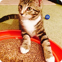 Adopt A Pet :: Davy - Marlton, NJ