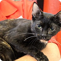 Adopt A Pet :: Mugsy - Sarasota, FL