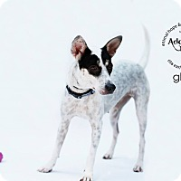Adopt A Pet :: Glory - Sherman Oaks, CA