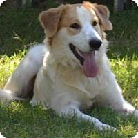 Adopt A Pet :: TX/Samantha - Brewster, MA