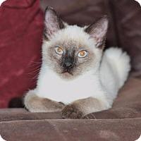 Adopt A Pet :: Will - Arlington, TX