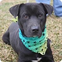 Adopt A Pet :: Camelot - Kinston, NC