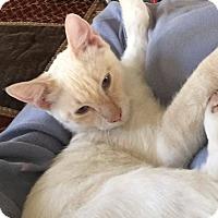 Adopt A Pet :: Electra - Mansfield, TX