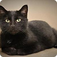 Adopt A Pet :: Marisol - West Des Moines, IA