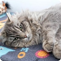 Adopt A Pet :: Furby - Boise, ID