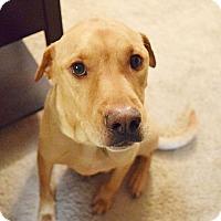 Adopt A Pet :: Finn - Huntsville, AL