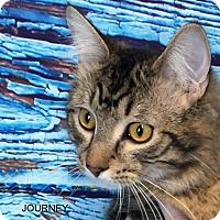 Adopt A Pet :: Journey - Hibbing, MN