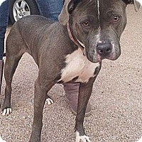 Adopt A Pet :: Holly - Scottsdale, AZ