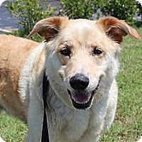 Adopt A Pet :: Dusty - Justin, TX