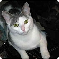 Adopt A Pet :: Radish - Markham, ON