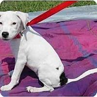 Adopt A Pet :: Jewel - Milwaukee, WI