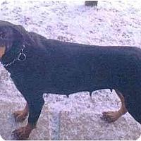 Adopt A Pet :: Spice - New Kensington, PA