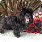 Adopt A Pet :: WHOOPI