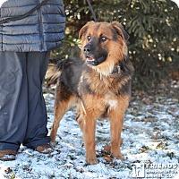 Adopt A Pet :: Jackson - Springfield, IL