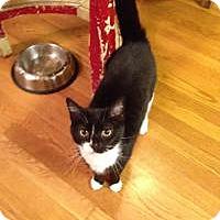 Adopt A Pet :: Goose - Richmond, VA