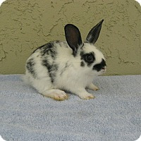 Adopt A Pet :: Kelsey - Bonita, CA