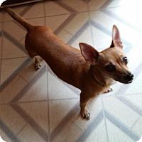 Adopt A Pet :: Bell - Matthews, NC