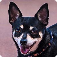 Adopt A Pet :: Cha Cha Charlie - San Marcos, CA