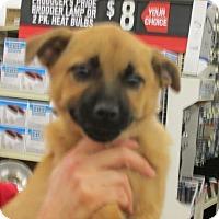 Adopt A Pet :: Jana - Rocky Mount, NC