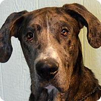 Adopt A Pet :: Liam - Bethel, OH