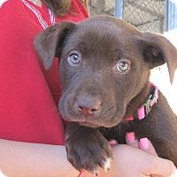 Adopt A Pet :: Margo - Wharton, TX