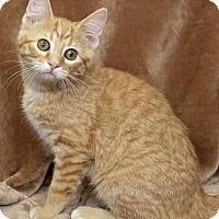 Adopt A Pet :: Helen - St Louis, MO