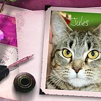 Adopt A Pet :: Jules - Wichita Falls, TX