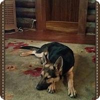 Adopt A Pet :: Willow(CL) - Greensboro, NC