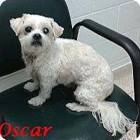Adopt A Pet :: Oscar - Mississauga, ON