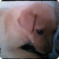 Adopt A Pet :: KLAUS - San Antonio, TX