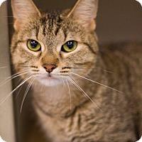 Adopt A Pet :: Kacia - Grayslake, IL