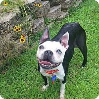 Adopt A Pet :: Ashley - Nashville, TN