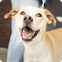Adopt A Pet :: Harvey - Uxbridge, MA