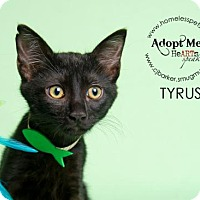 Adopt A Pet :: Tyrus - Houston, TX