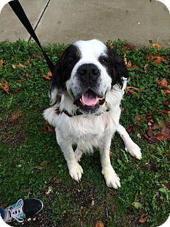Dog Training Bellingham Washington