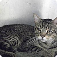 Adopt A Pet :: Kojak - Flint, MI