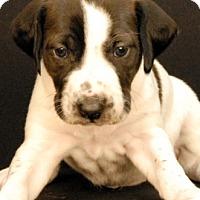 Adopt A Pet :: Maddon - Newland, NC