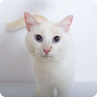 Adopt A Pet :: Chester - Mission Viejo, CA
