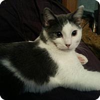Adopt A Pet :: Corbin - Lexington, KY