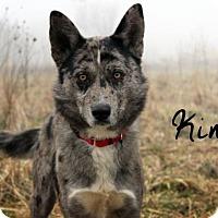 Adopt A Pet :: King - Joliet, IL