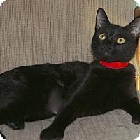 Adopt A Pet :: Ninja - Englewood, FL