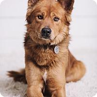 Adopt A Pet :: Oliver - Portland, OR